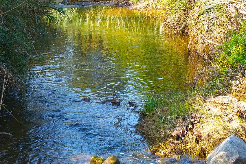 Aus remullant-se al riu. Itinerari pel Mogent. Vilanova del Vallès. Vallès Oriental