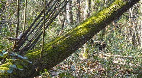 Vall de Llémena, bosc