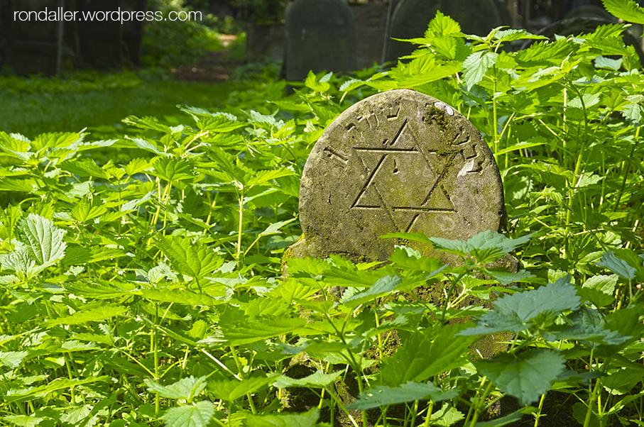 Itinerari per Varsòvia. Fita entre la vegetació al cementiri jueu, on hi ha una estrella de David.