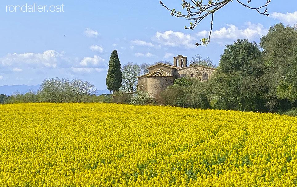 La capella de Santa Maria de Vilademany, entre camps de colza, al municipi d'Aiguavia (Gironès).